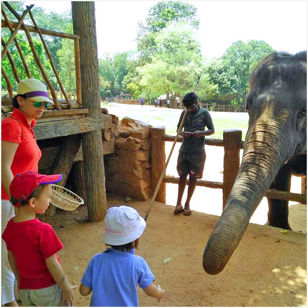 G10 - Sri lanka senuvi tours